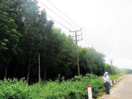 Vi phạm hành lang an toàn lưới điện tại Đắk Lắk: Còn cảnh báo đến bao giờ?